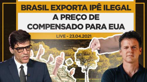 Brasil exporta Ipê ilegal a preço de compensado para EUA – Live com Alexandre Saraiva