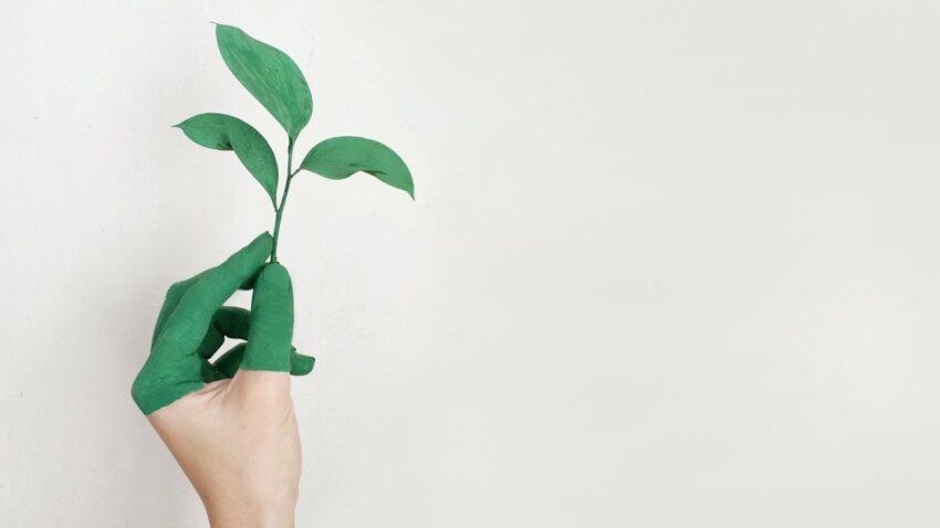 Fundos ESG: um guia sobre fundos de investimentos